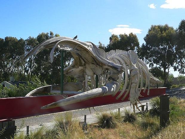 ecocentro puerto madryn esqueleto baleia