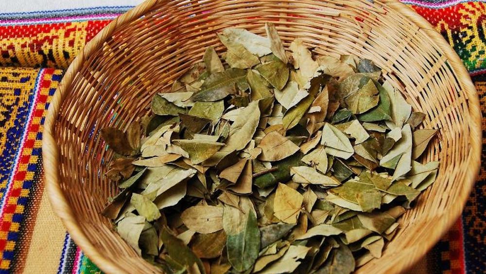 comidas-tipicas-bolivia-folha-de-coca