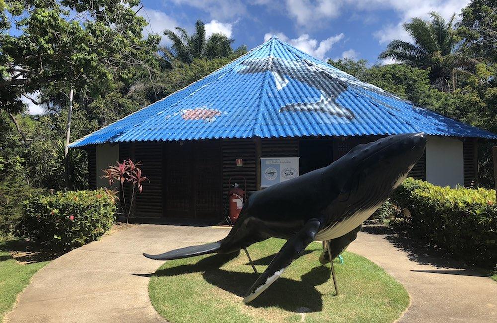 Instituto Baleia Jubarte, ponto turístico de Praia do Forte